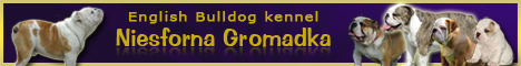 English Bulldog kennel NIESFORNA GROMADKA